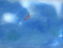 A10_Adler