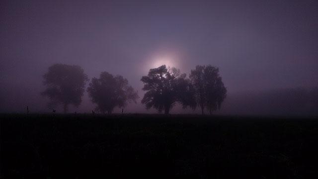 4-Freunde-Nebel-web