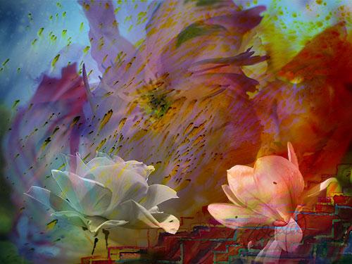 Blume-V03web