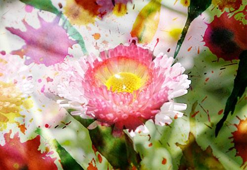 Blume-V04web