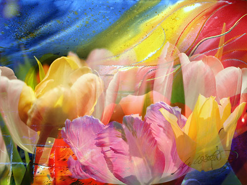 Blume-V08web