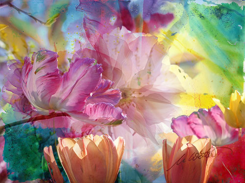 Blume-V09web