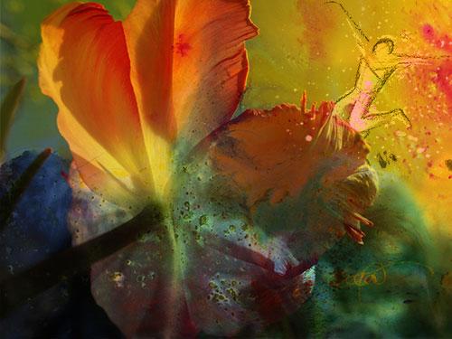 Blume-pappe-V02web