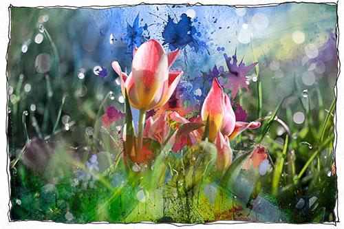 Blumen-Tropfen-blau-Rahmen-weiss-web