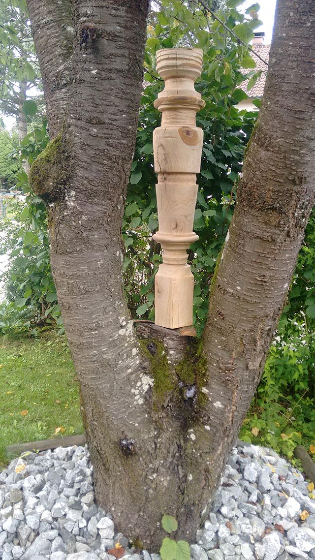 Säule-1-Kirsche-4-im-Baum-web