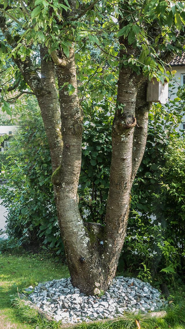leerer-Baum-web
